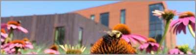 Office of Sustainability banner image